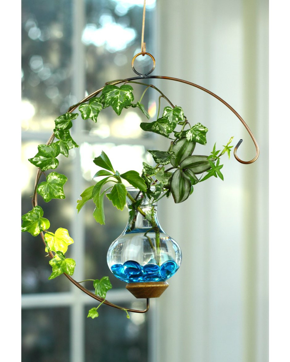 Crescent hanging water garden live plants included for Blumentopf glas