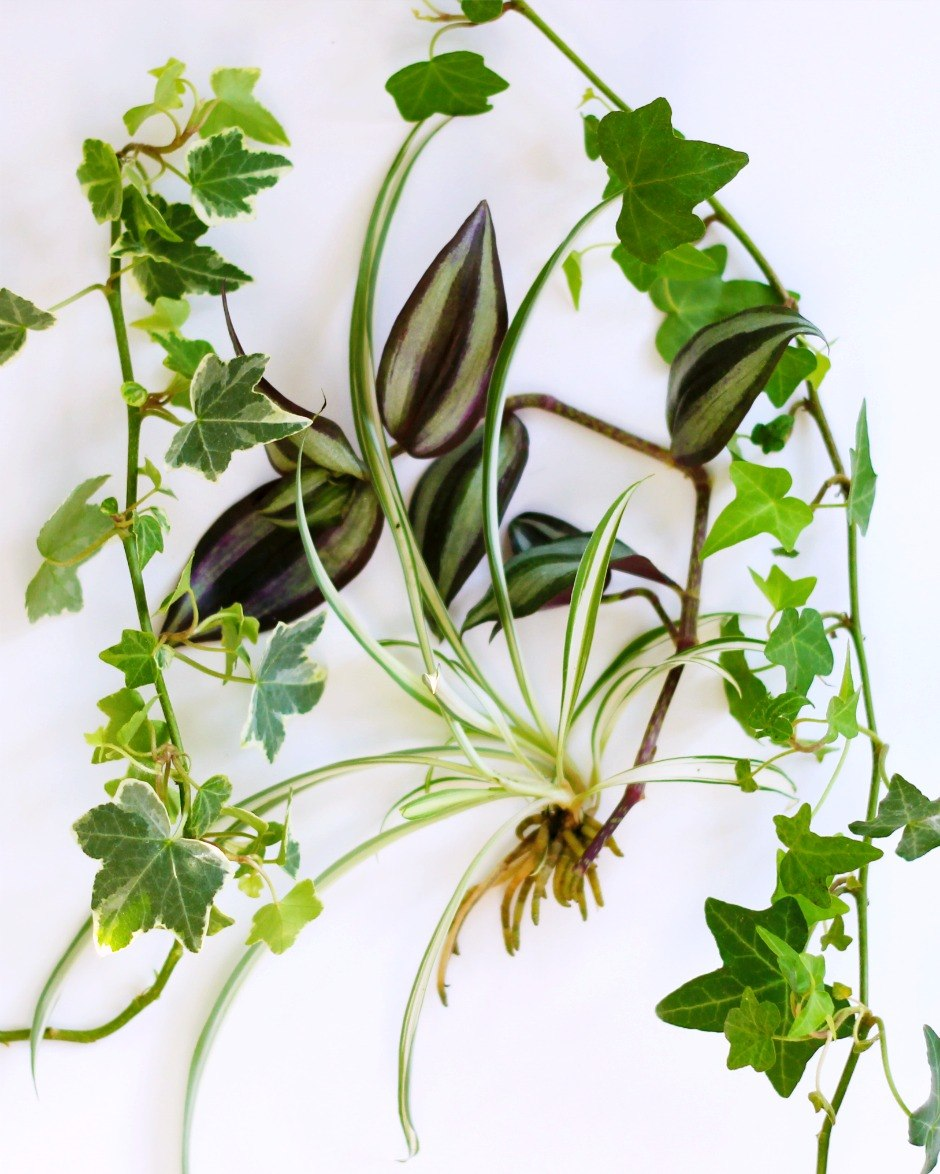 New free plants for your hanging water garden vermont for New garden plants