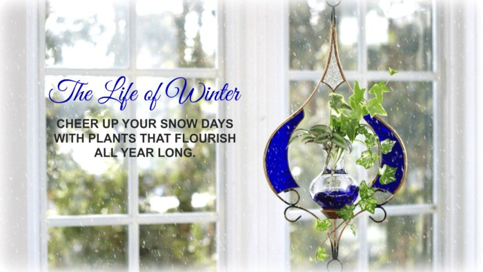 Vermont Nature Creations - The Life of Winter