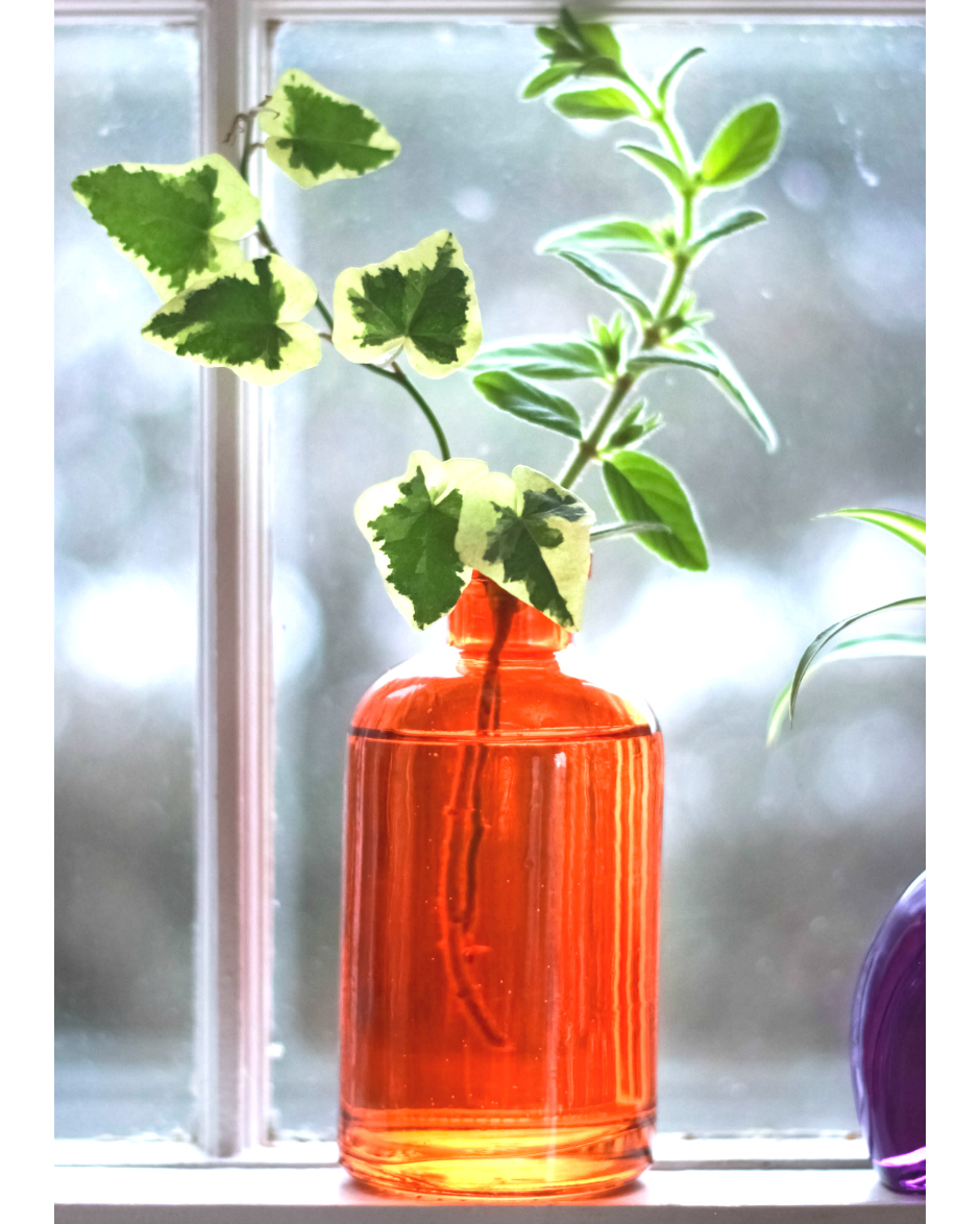Summer Collection Pop Color Vases [Live plants included] - Vermont ...